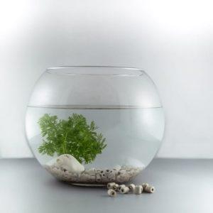 perles filtrantes eau